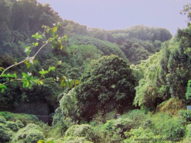 Regenwald auf Maui