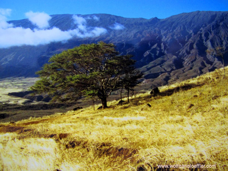 Ein einzelner Baum steht auf einer trockenen Wise vor imposanter Bergkulisse
