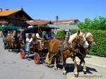 Zwei Pferdekutschen beim Festzug zum Rossmarkt in Rottach-Egern