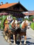 Zwei Pferd ziehen einen Wagen mit einem bärtigen Mann