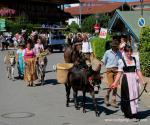 Eine Trachtengruppe führt Esel bei einem Umzug