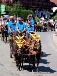 vier Ponys mit gelber Haube ziehen einen Wagen