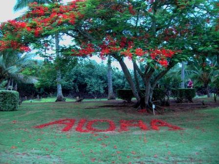 Aloha mit Blüten gelegt