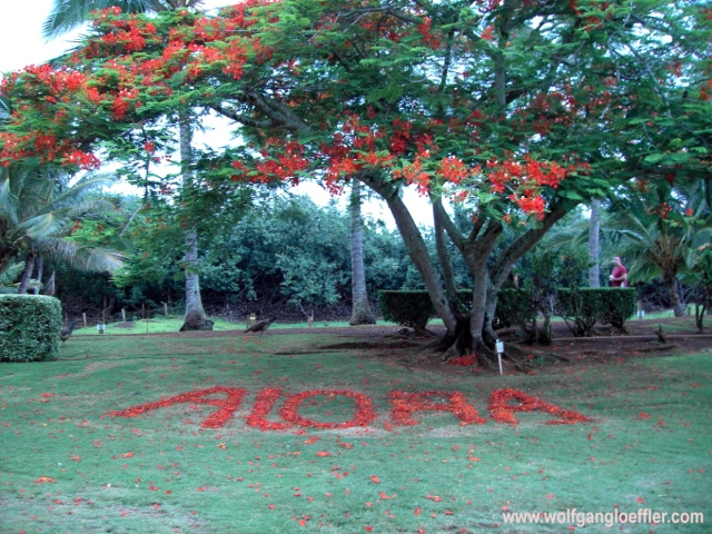 Aloha written with flowers