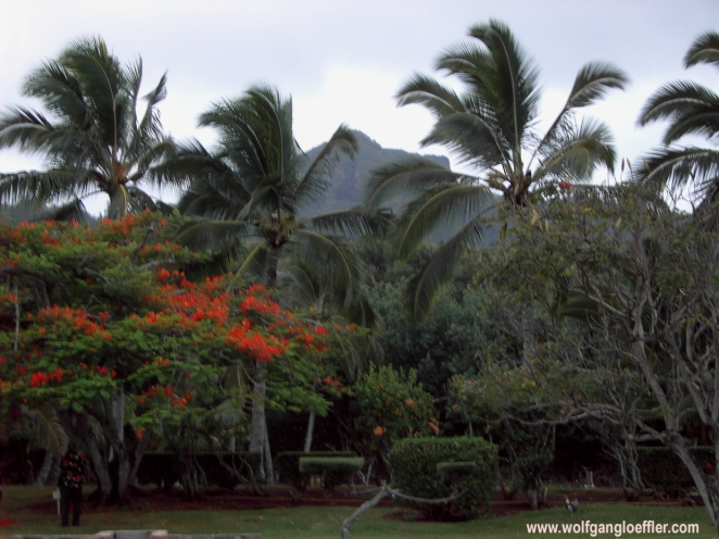 a mounatin called sleeping giant seen through palm trees