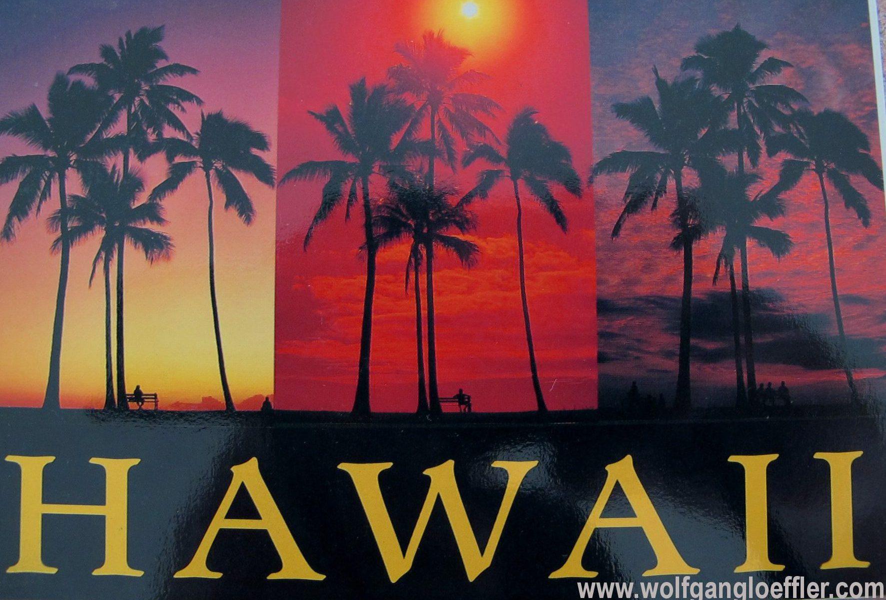 Drei Fotos mit Palmen im Sonnenuntergang