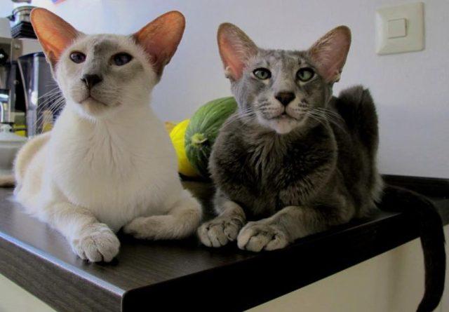 Nelson und Henri