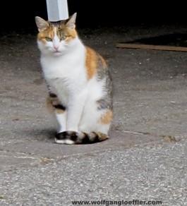 The compulsory cat pic