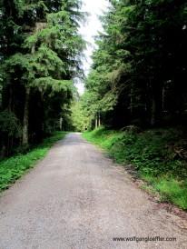 135-Forstweg auf dem Abstieg