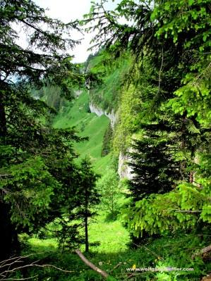 19Blick durch Bäume auf Feslwand