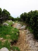 98-pfad durch latschewald