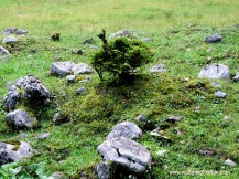 kleiner Baum zwichen Felsen