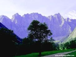 044-baum-vor-laliederwand-beitrgasbild