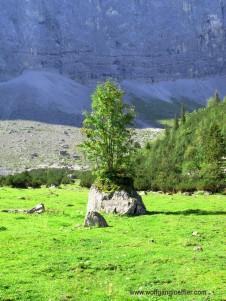 Baum auf Felsblock