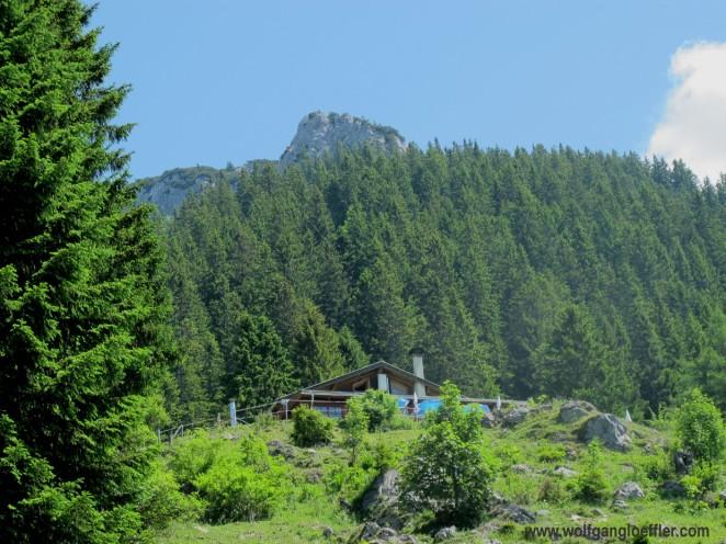 Almhütte mit Tannenwald und Berggipfel im Hintergrund