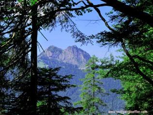 080-bergpanorama durch bäume