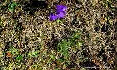 093-glockenblume mit bäumchen