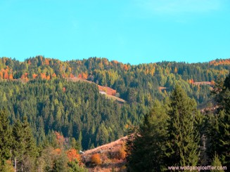 view of the fall foliage
