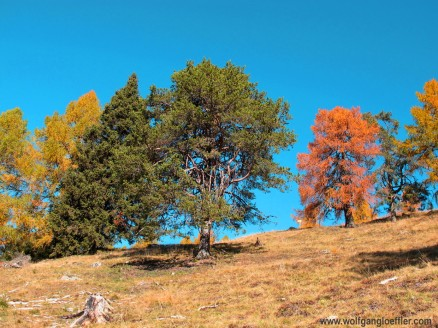 023-bäume auf wiese