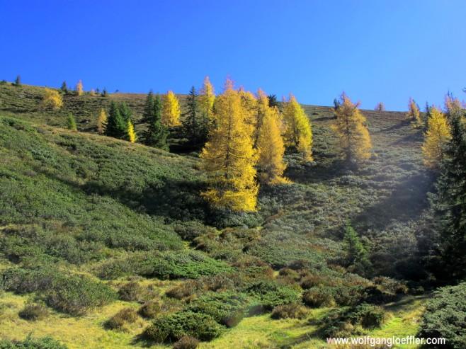 Hang mit Alpenrosen