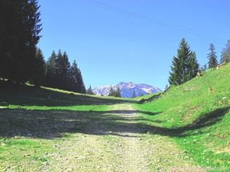 034-weg mit bergpanorama