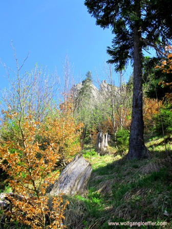 040-bäume mit herbstlaub