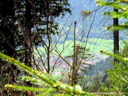 089-blick auf ettal durch bäume
