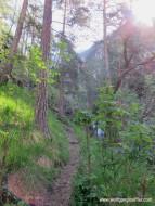 041-pfad im Wald
