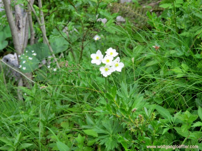 076-weiße Blume