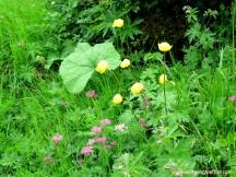 141-butterblumen