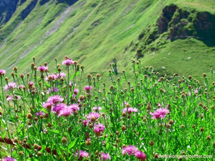 039-Blumen und marterl