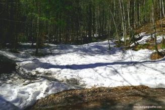 Schneereste im Wald