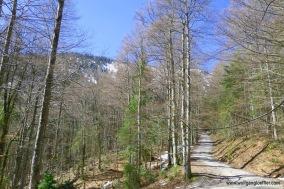 Weg zum Hirschberg