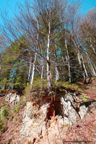 Baum am Fesen