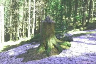 stienerner Wegweiser im Wald
