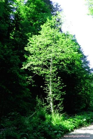 011-einzelner Baum am wegesrand