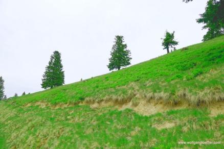 065-drei baeume am berg