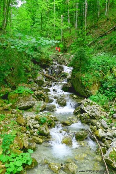 114-wildbach im wald