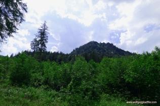109-hügel wald und wolken