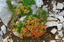 055-orangene blumen