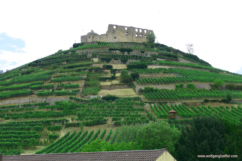Blick auf einen Hügel mit Weinbergen und einer Burgruine auf dem Gipfel