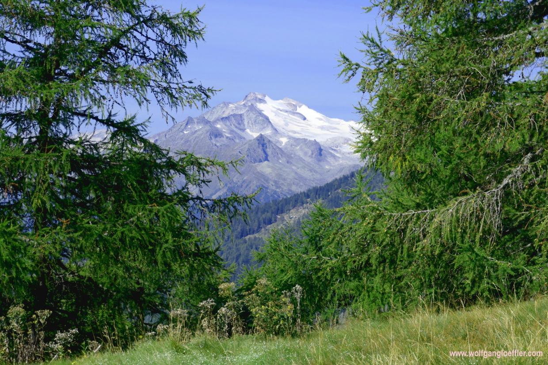 Blick durch zwei Bäume auf einen schneebedeckten Berggipfel